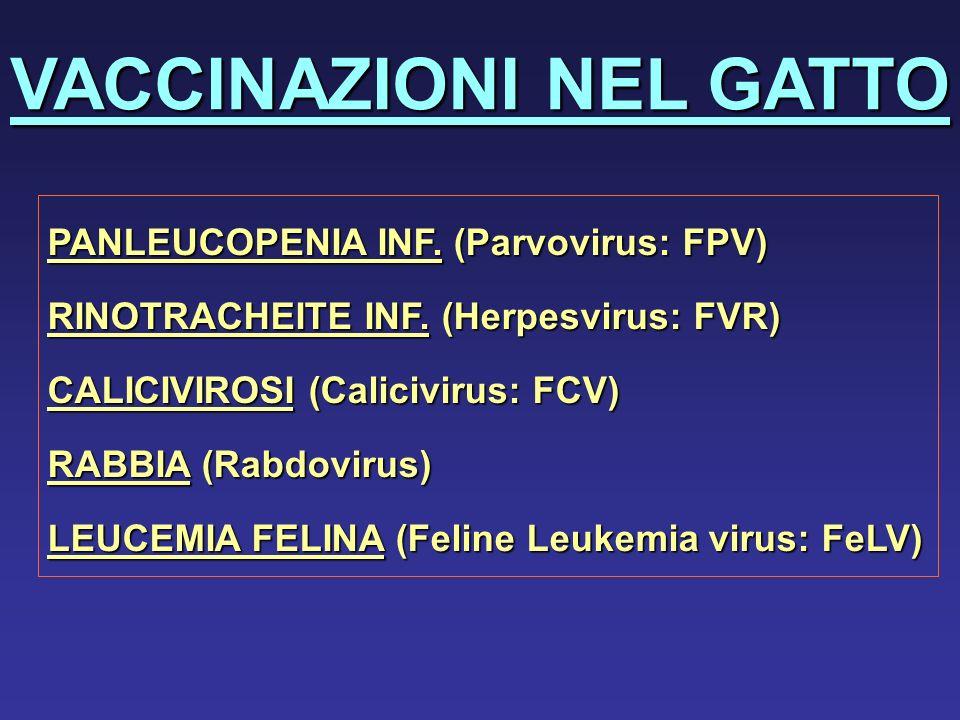 VACCINAZIONI NEL GATTO PANLEUCOPENIA INF. (Parvovirus: FPV) RINOTRACHEITE INF. (Herpesvirus: FVR) CALICIVIROSI (Calicivirus: FCV) RABBIA (Rabdovirus)