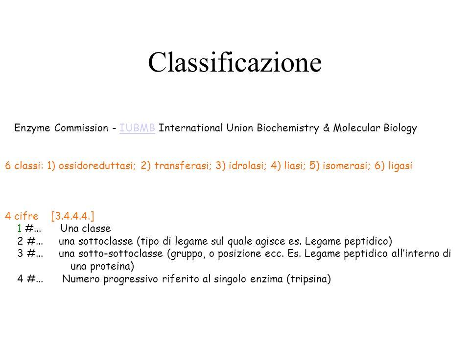 Classificazione Enzyme Commission - IUBMB International Union Biochemistry & Molecular Biology IUBMB 6 classi: 1) ossidoreduttasi; 2) transferasi; 3)
