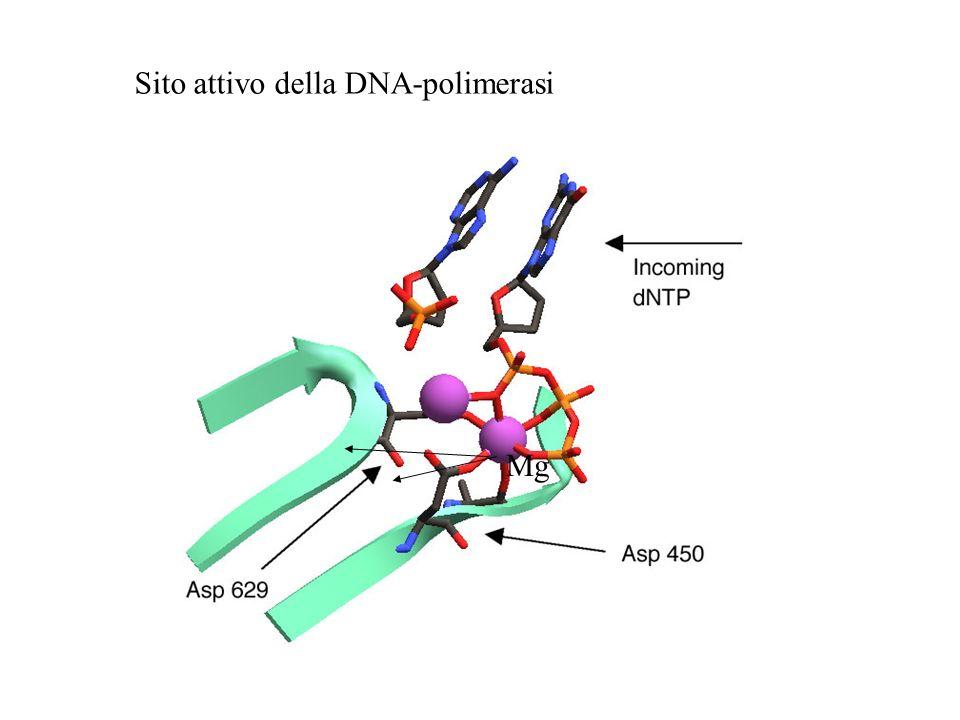 chimotripsina acetilcolinesterasi