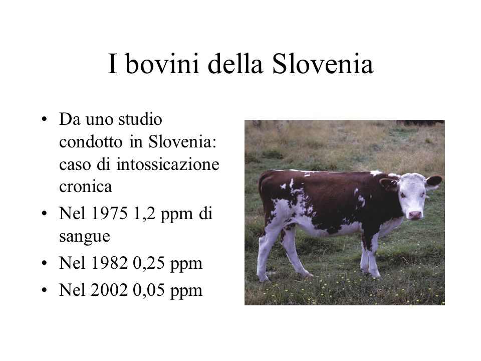 I bovini della Slovenia Da uno studio condotto in Slovenia: caso di intossicazione cronica Nel 1975 1,2 ppm di sangue Nel 1982 0,25 ppm Nel 2002 0,05 ppm