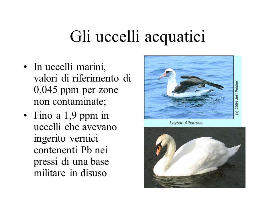 Gli uccelli acquatici In uccelli marini, valori di riferimento di 0,045 ppm per zone non contaminate; Fino a 1,9 ppm in uccelli che avevano ingerito vernici contenenti Pb nei pressi di una base militare in disuso