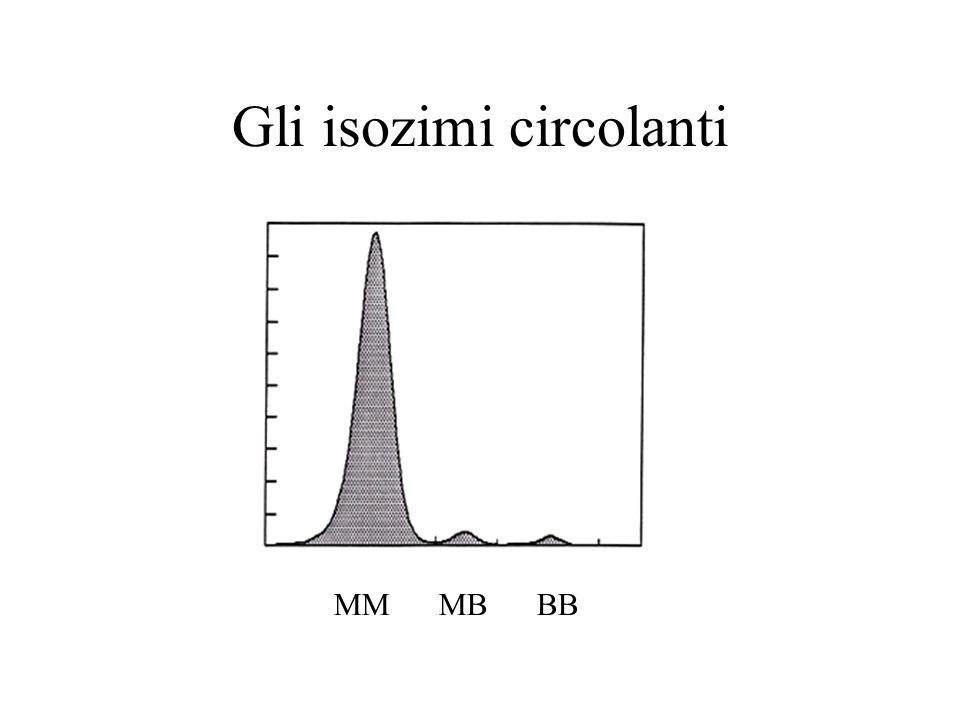 Gli isozimi circolanti MM MB BB