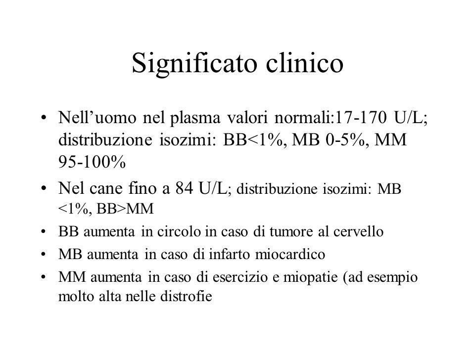 Significato clinico Nelluomo nel plasma valori normali:17-170 U/L; distribuzione isozimi: BB<1%, MB 0-5%, MM 95-100% Nel cane fino a 84 U/L ; distribu