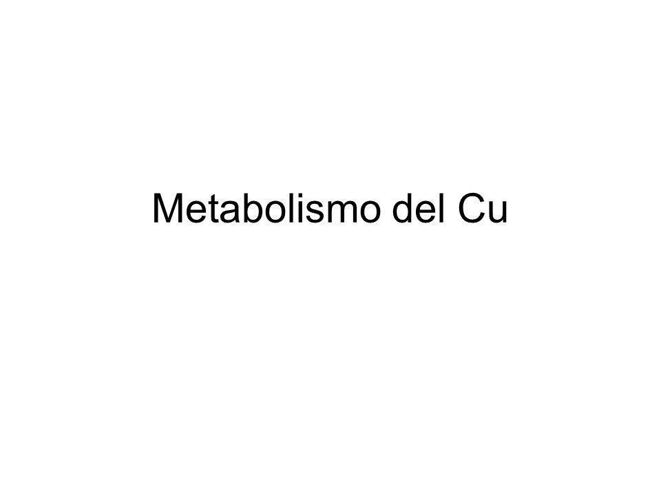 Metabolismo del Cu