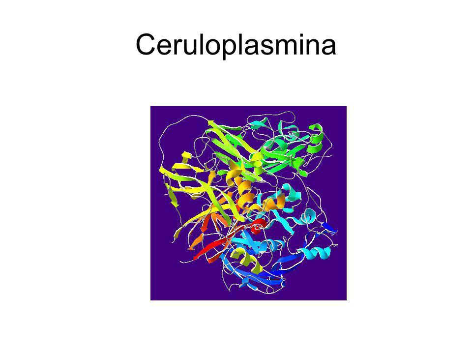 Ceruloplasmina