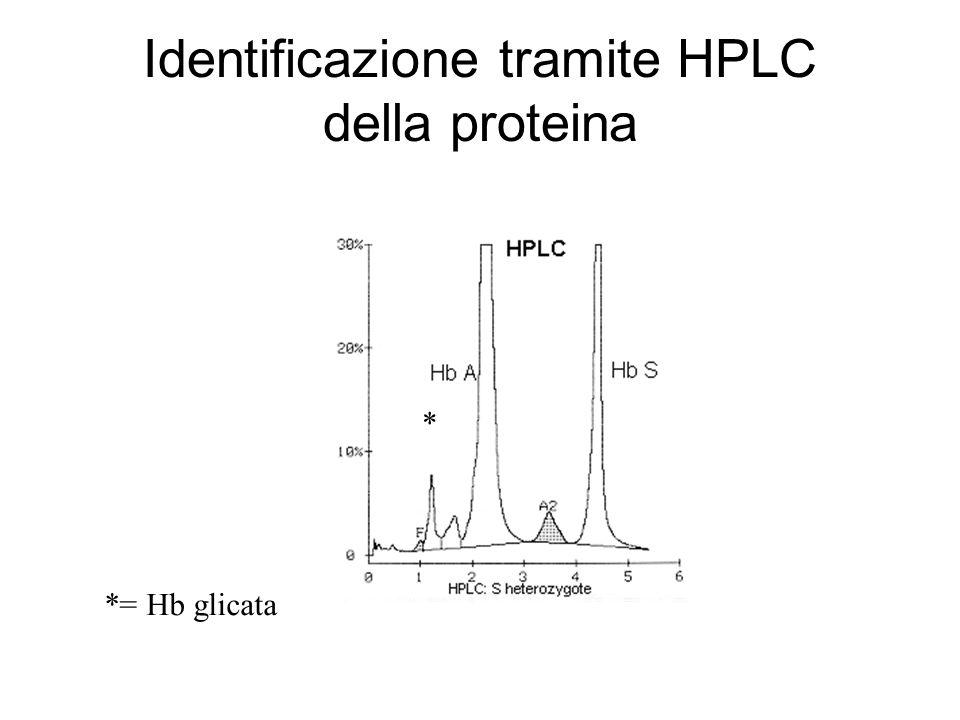 Identificazione tramite HPLC della proteina * *= Hb glicata