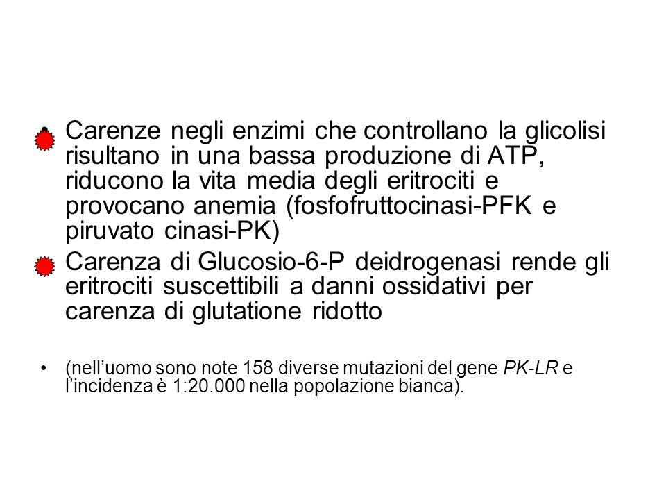 Carenze negli enzimi che controllano la glicolisi risultano in una bassa produzione di ATP, riducono la vita media degli eritrociti e provocano anemia (fosfofruttocinasi-PFK e piruvato cinasi-PK) Carenza di Glucosio-6-P deidrogenasi rende gli eritrociti suscettibili a danni ossidativi per carenza di glutatione ridotto (nelluomo sono note 158 diverse mutazioni del gene PK-LR e lincidenza è 1:20.000 nella popolazione bianca).