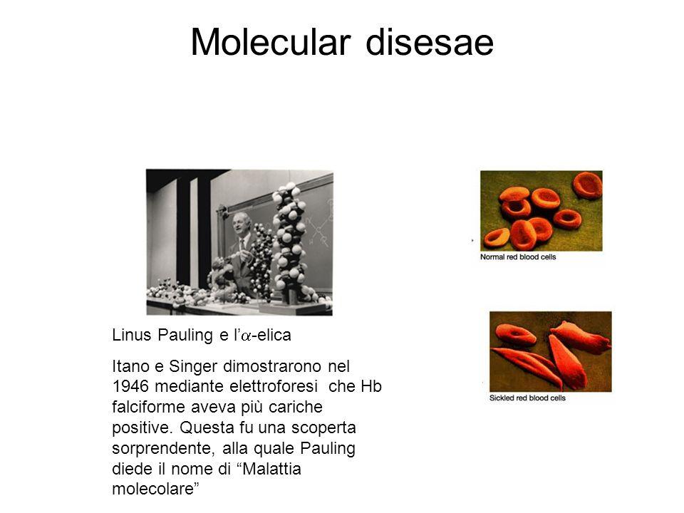 Molecular disesae Linus Pauling e l -elica Itano e Singer dimostrarono nel 1946 mediante elettroforesi che Hb falciforme aveva più cariche positive.