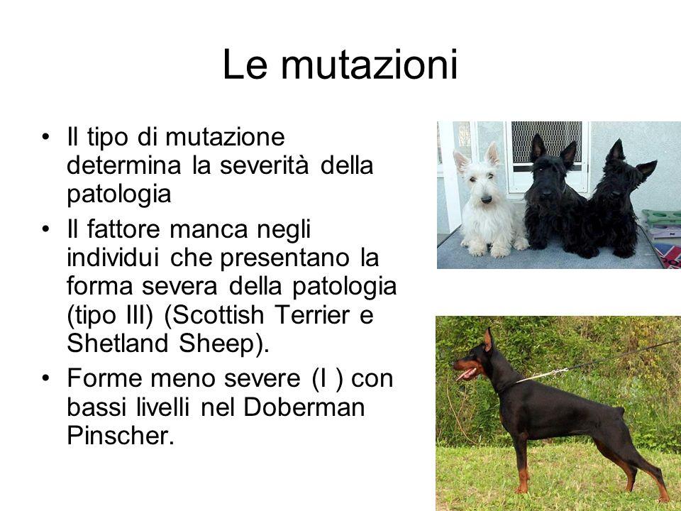 Le mutazioni Il tipo di mutazione determina la severità della patologia Il fattore manca negli individui che presentano la forma severa della patologia (tipo III) (Scottish Terrier e Shetland Sheep).