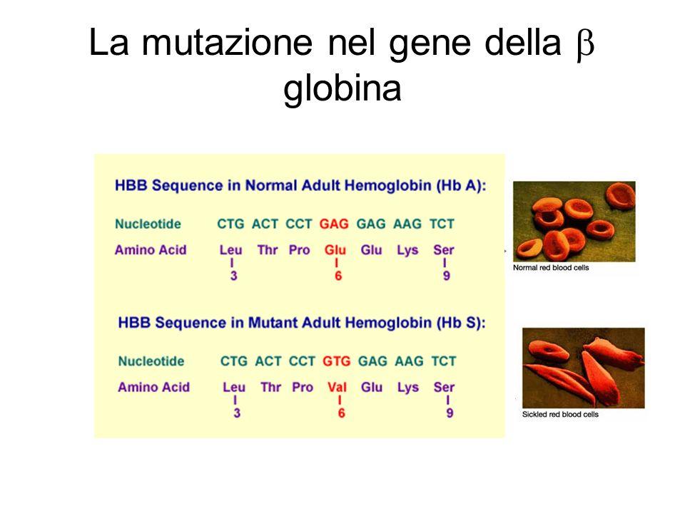 La mutazione nel gene della globina