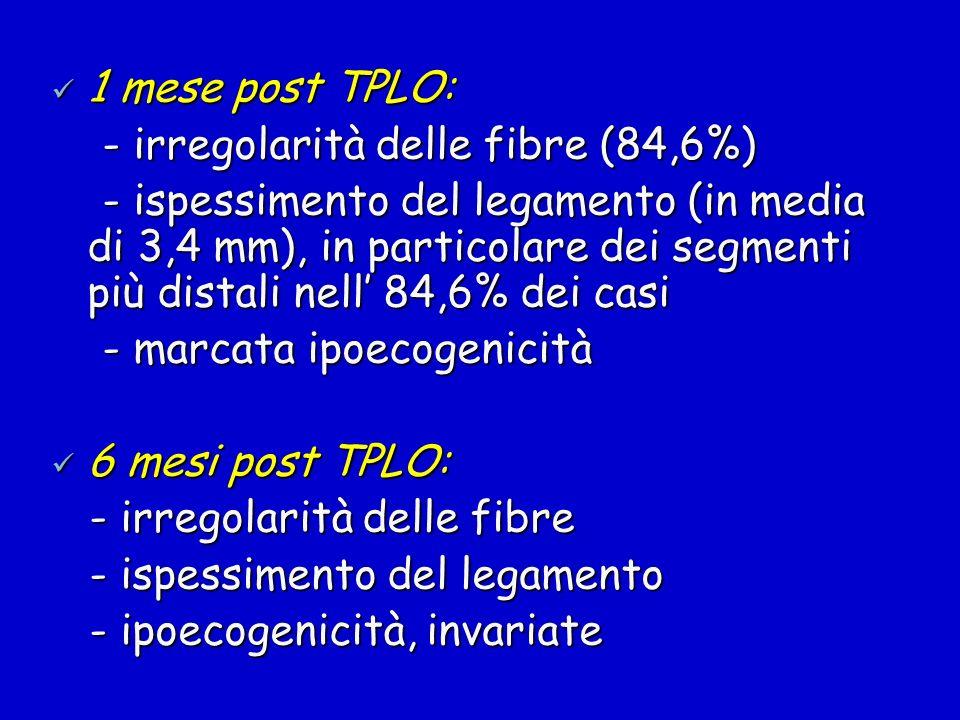 1 mese post TPLO: 1 mese post TPLO: - irregolarità delle fibre (84,6%) - irregolarità delle fibre (84,6%) - ispessimento del legamento (in media di 3,