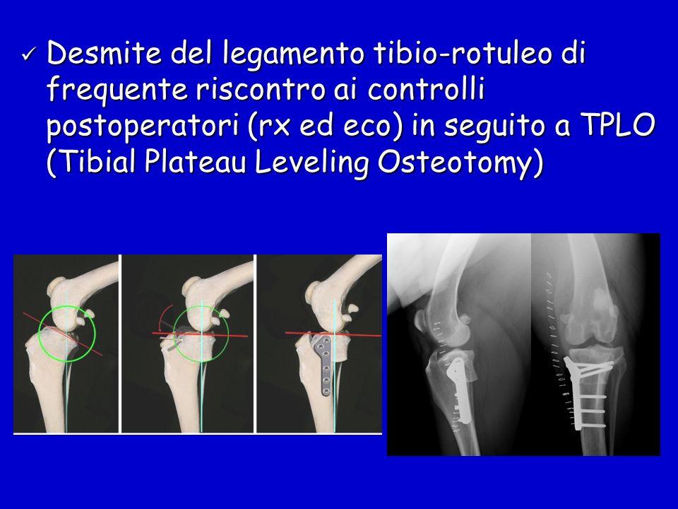 Desmite del legamento tibio-rotuleo di frequente riscontro ai controlli postoperatori (rx ed eco) in seguito a TPLO (Tibial Plateau Leveling Osteotomy