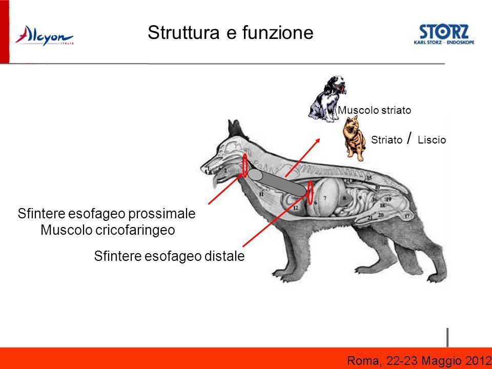 Struttura e funzione Sfintere esofageo prossimale Muscolo cricofaringeo Sfintere esofageo distale Muscolo striato Striato / Liscio