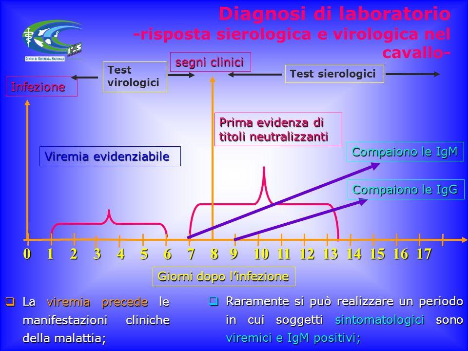 Messa a punto del protocollo diagnostico Importante considerare la patogenesi della malattia e la dinamica degli anticorpi Importante considerare la p
