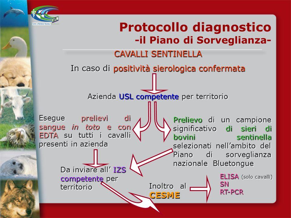 POLLI SENTINELLA In caso di positività sierologica confermata o PCR+ Protocollo diagnostico -il Piano di Sorveglianza- Abbattimento immediato di tutti