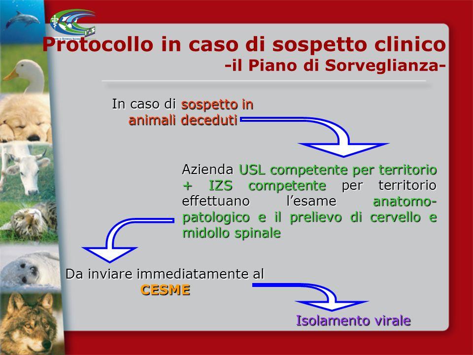 Sospetta sintomatologia neurologica in equini Protocollo in caso di sospetto clinico -il Piano di Sorveglianza- Azienda USL competente per territorio