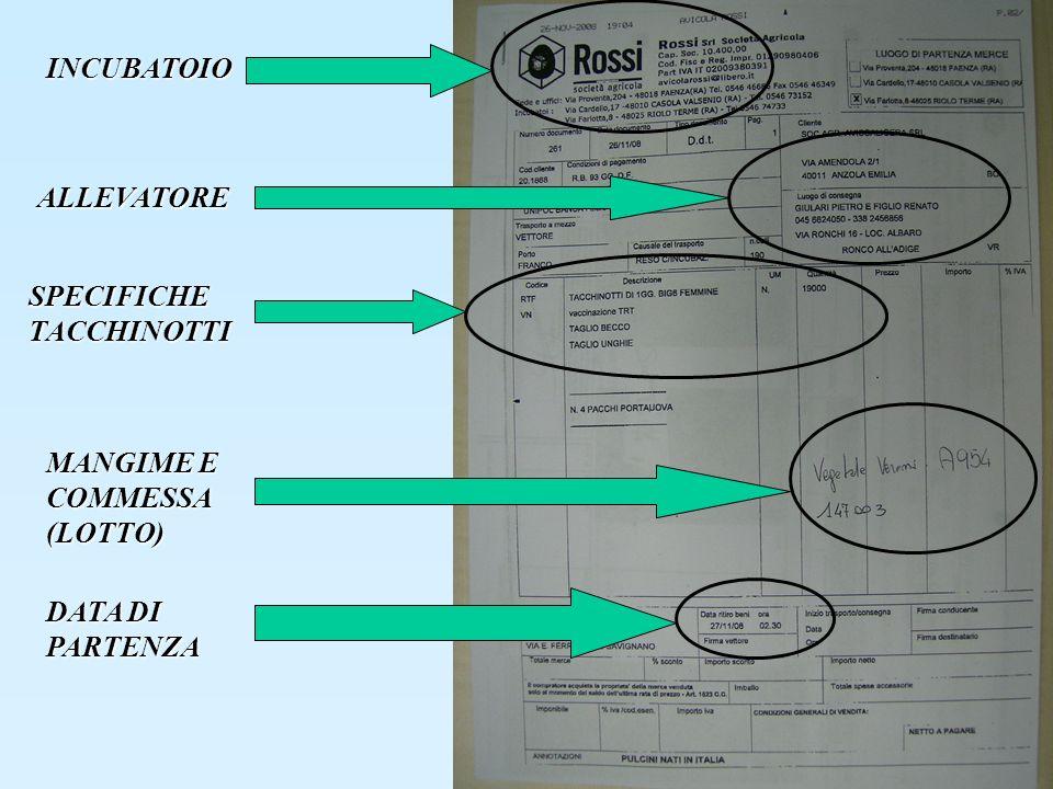 INCUBATOIO SPECIFICHE TACCHINOTTI MANGIME E COMMESSA (LOTTO) DATA DI PARTENZA ALLEVATORE