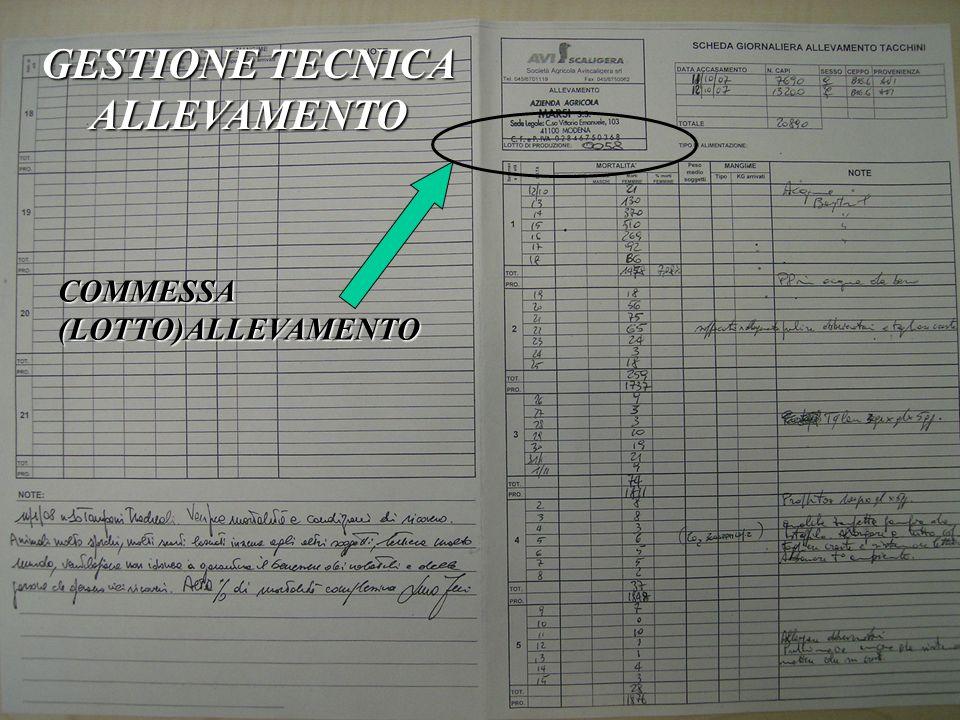 GESTIONE TECNICA ALLEVAMENTO COMMESSA (LOTTO)ALLEVAMENTO