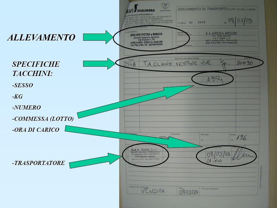 ALLEVAMENTO SPECIFICHE TACCHINI: -SESSO -KG -NUMERO -COMMESSA (LOTTO) -ORA DI CARICO -TRASPORTATORE