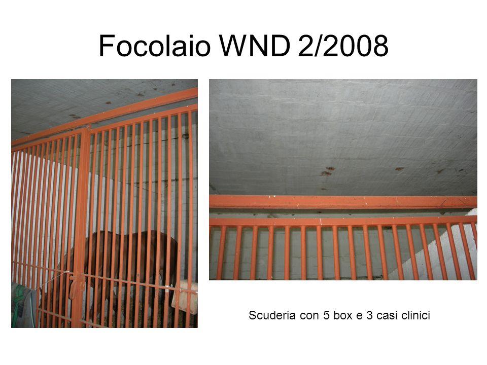 Focolaio WND 2/2008 Scuderia con 5 box e 3 casi clinici