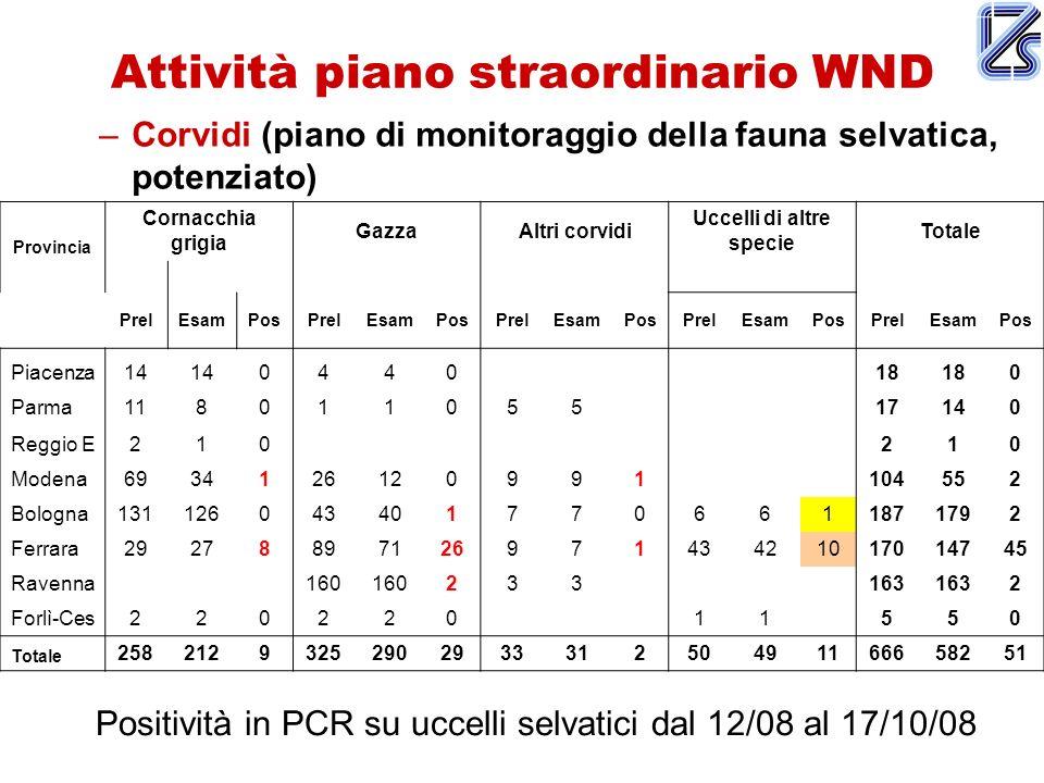 Attività piano straordinario WND –Corvidi (piano di monitoraggio della fauna selvatica, potenziato) Provincia Cornacchia grigia GazzaAltri corvidi Ucc