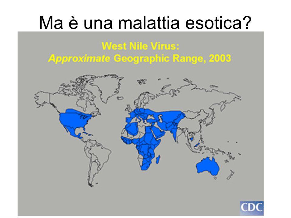 Ma è una malattia esotica?