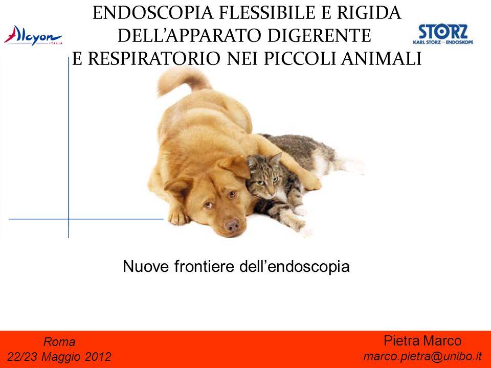 Endoscopia midollare Prange et al.Equine vet. J. (2011) 43: 404-411 Prange et al.