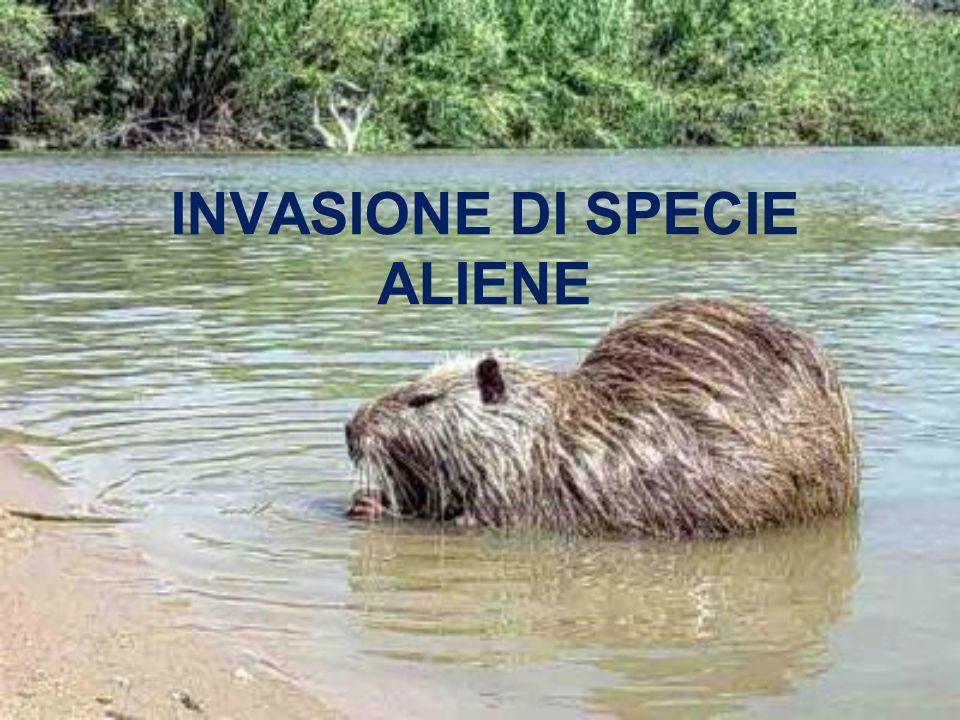 INVASIONE DI SPECIE ALIENE