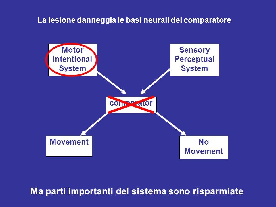 La lesione danneggia le basi neurali del comparatore Motor Intentional System Sensory Perceptual System comparator MovementNo Movement Ma parti importanti del sistema sono risparmiate