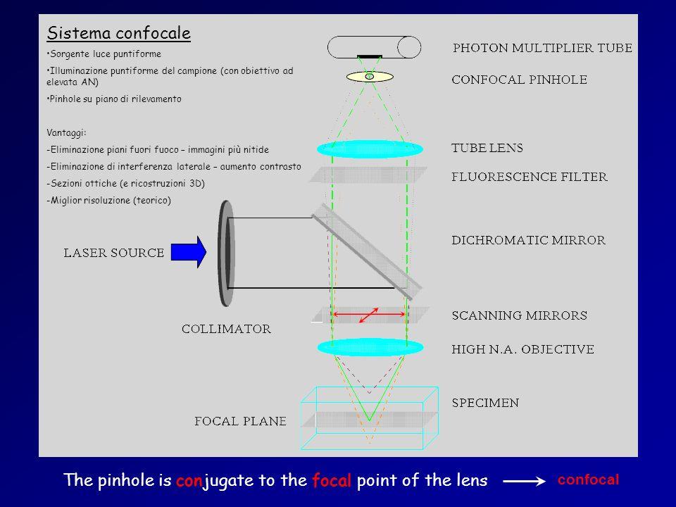 The pinhole is conjugate to the focal point of the lens Sistema confocale Sorgente luce puntiforme Illuminazione puntiforme del campione (con obiettiv
