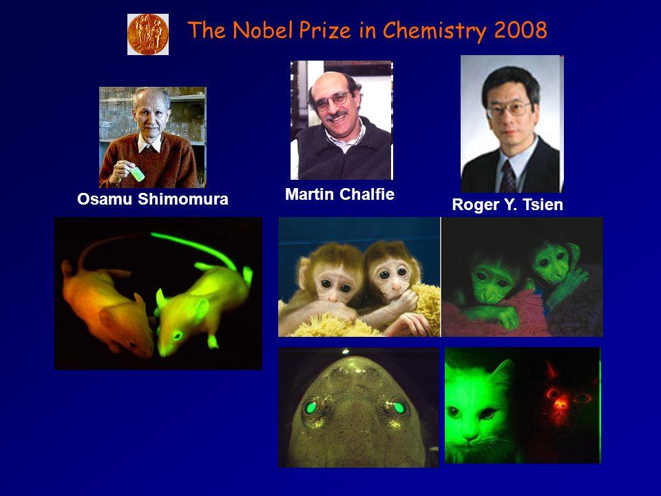 Martin Chalfie Osamu Shimomura Roger Y. Tsien The Nobel Prize in Chemistry 2008