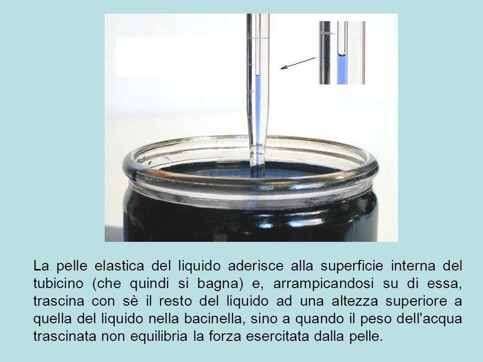 La pelle elastica del liquido aderisce alla superficie interna del tubicino (che quindi si bagna) e, arrampicandosi su di essa, trascina con sè il res