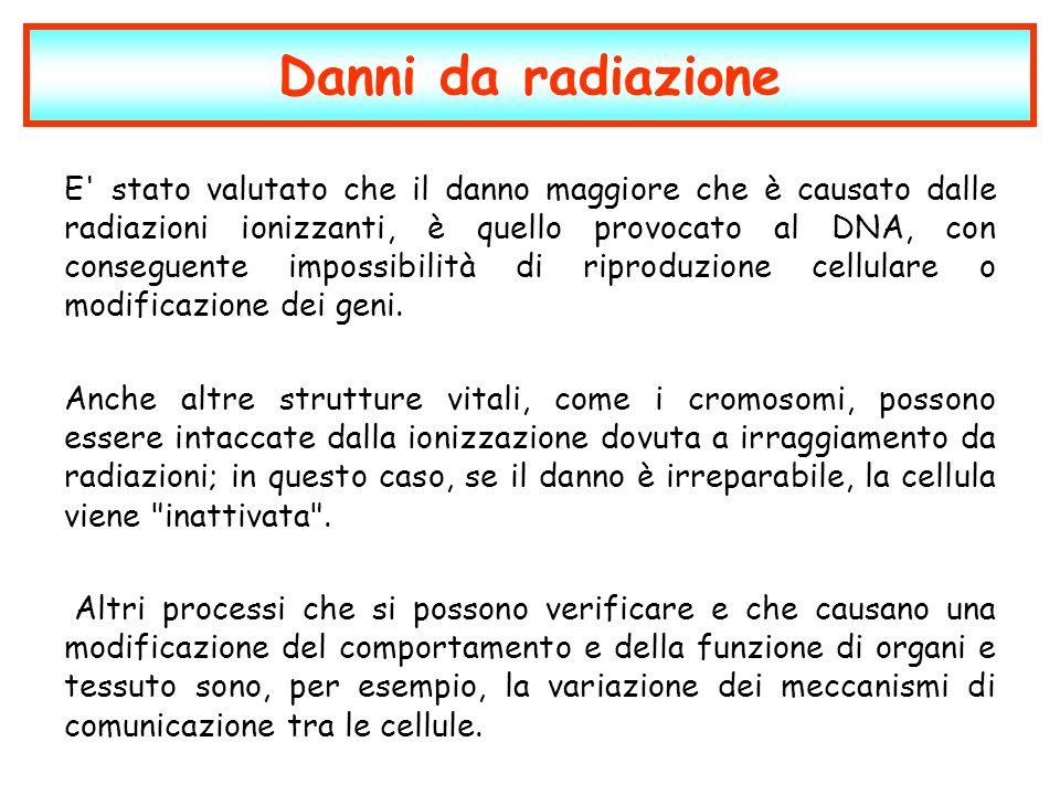 Danni da radiazione E' stato valutato che il danno maggiore che è causato dalle radiazioni ionizzanti, è quello provocato al DNA, con conseguente impo