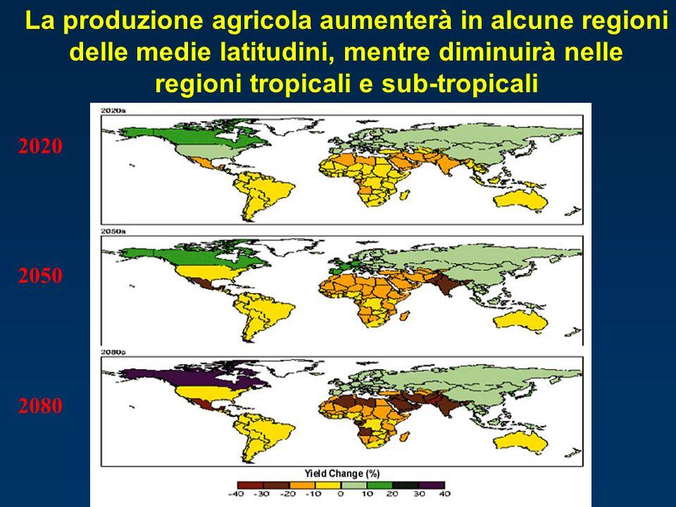 2020 2050 2080 La produzione agricola aumenterà in alcune regioni delle medie latitudini, mentre diminuirà nelle regioni tropicali e sub-tropicali