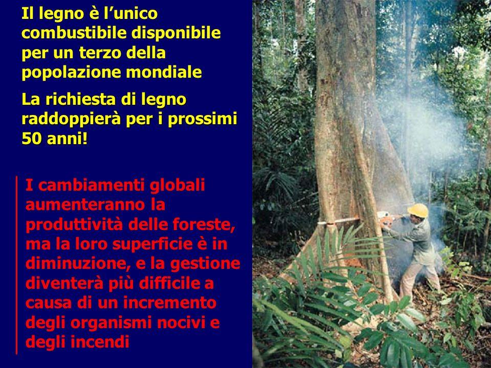 Il legno è lunico combustibile disponibile per un terzo della popolazione mondiale La richiesta di legno raddoppierà per i prossimi 50 anni! I cambiam