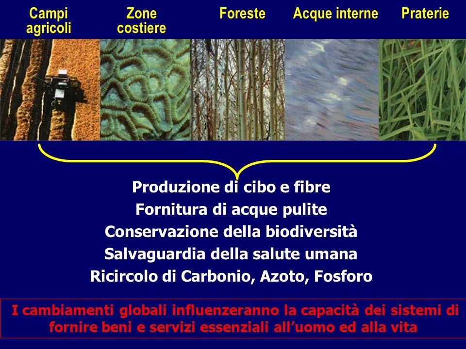 Produzione di cibo e fibre Fornitura di acque pulite Conservazione della biodiversità Salvaguardia della salute umana Ricircolo di Carbonio, Azoto, Fo