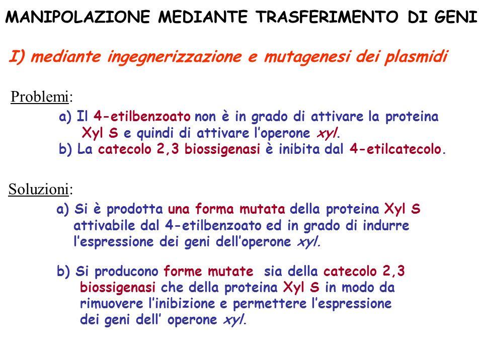 MANIPOLAZIONE MEDIANTE TRASFERIMENTO DI GENI I) mediante ingegnerizzazione e mutagenesi dei plasmidi Problemi: a) Il 4-etilbenzoato non è in grado di
