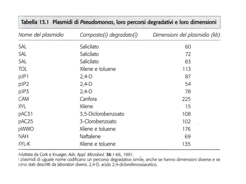 TRASFORMAZIONE ENZIMATICA DEI COMPOSTI AROMATICI IN CATECOLO