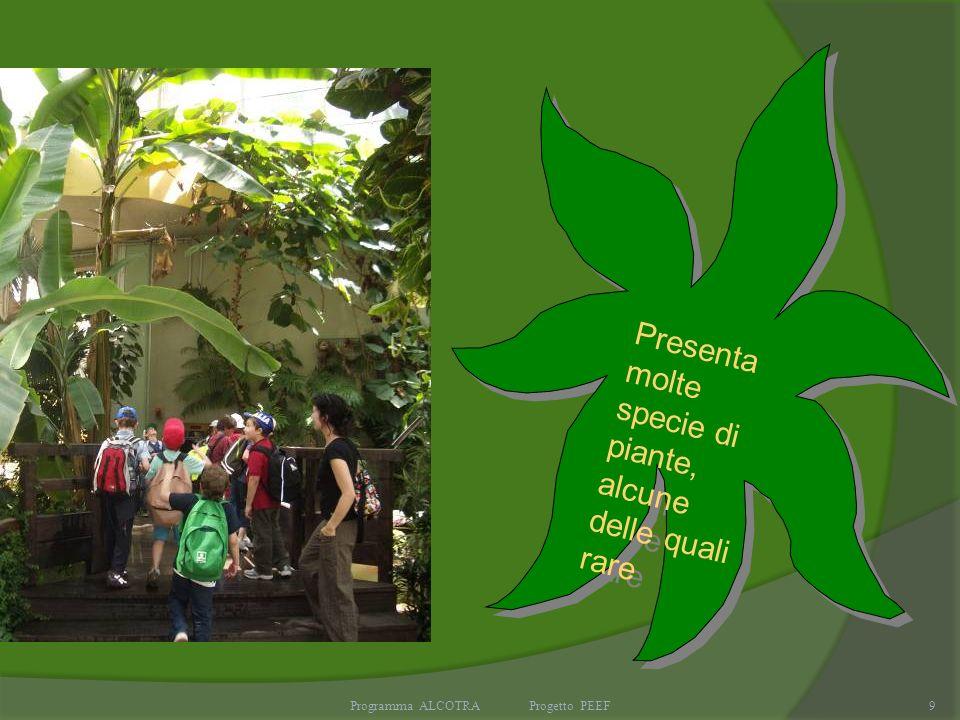 Programma ALCOTRA Progetto PEEF9 Presenta molte specie di piante, alcune delle quali rare