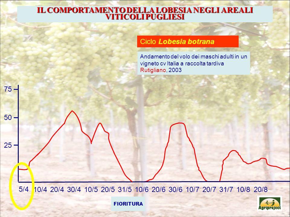 IL COMPORTAMENTO DELLA LOBESIA NEGLI AREALI VITICOLI PUGLIESI Ciclo Lobesia botrana Andamento del volo dei maschi adulti in un vigneto cv Italia a rac