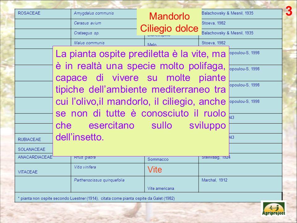 ROSACEAEAmygdalus communis Mandorlo Balachowsky & Mesnil, 1935 Cerasus avium Ciliegio dolce Stoeva, 1982 Crataegus sp. Biancospino Balachowsky & Mesni