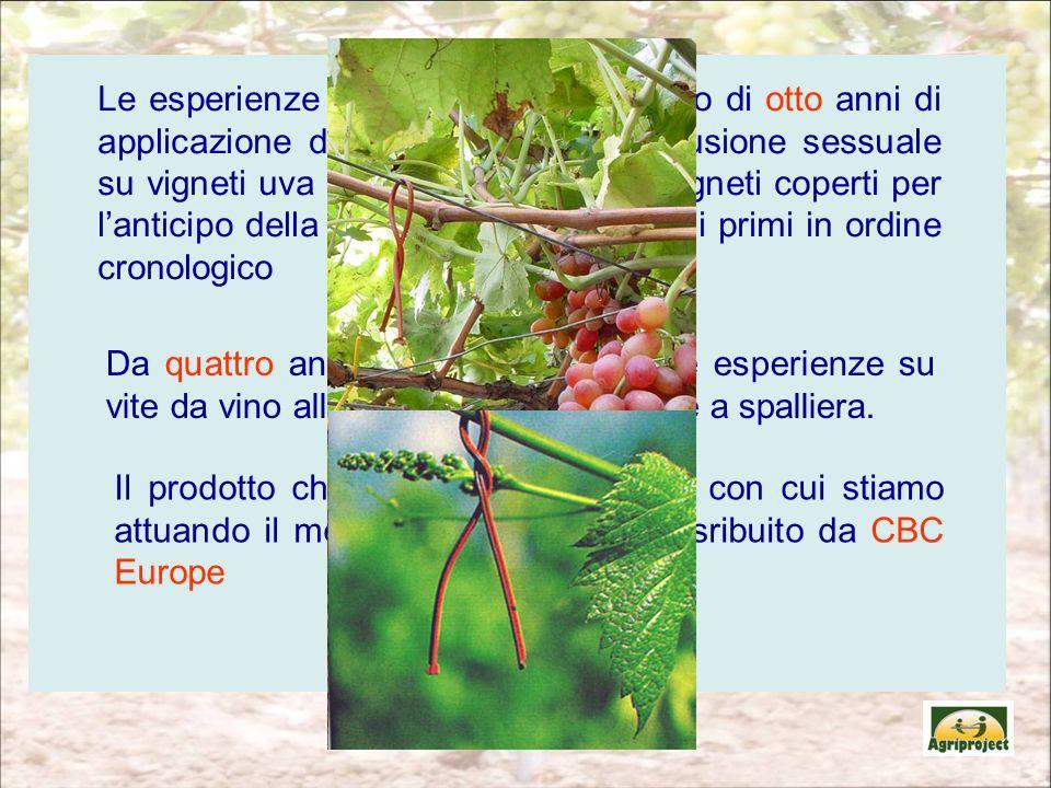 Le esperienze riportate sono il risultato di otto anni di applicazione della tecnica della confusione sessuale su vigneti uva da tavola in Puglia. I v