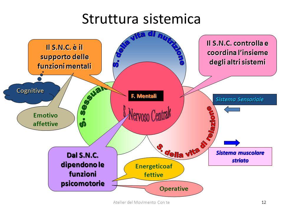 Struttura sistemica 12 Sistema Sensoriale Sistema muscolare striato F. Mentali Il S.N.C. controlla e coordina linsieme degli altri sistemi Dal S.N.C.
