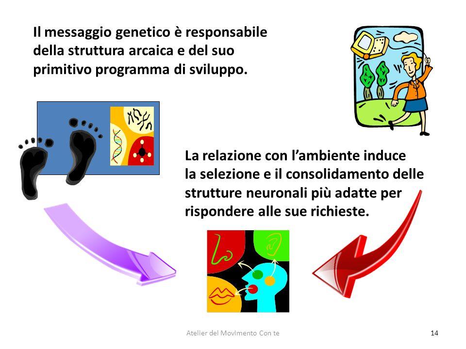 14 Il messaggio genetico è responsabile della struttura arcaica e del suo primitivo programma di sviluppo. La relazione con lambiente induce la selezi