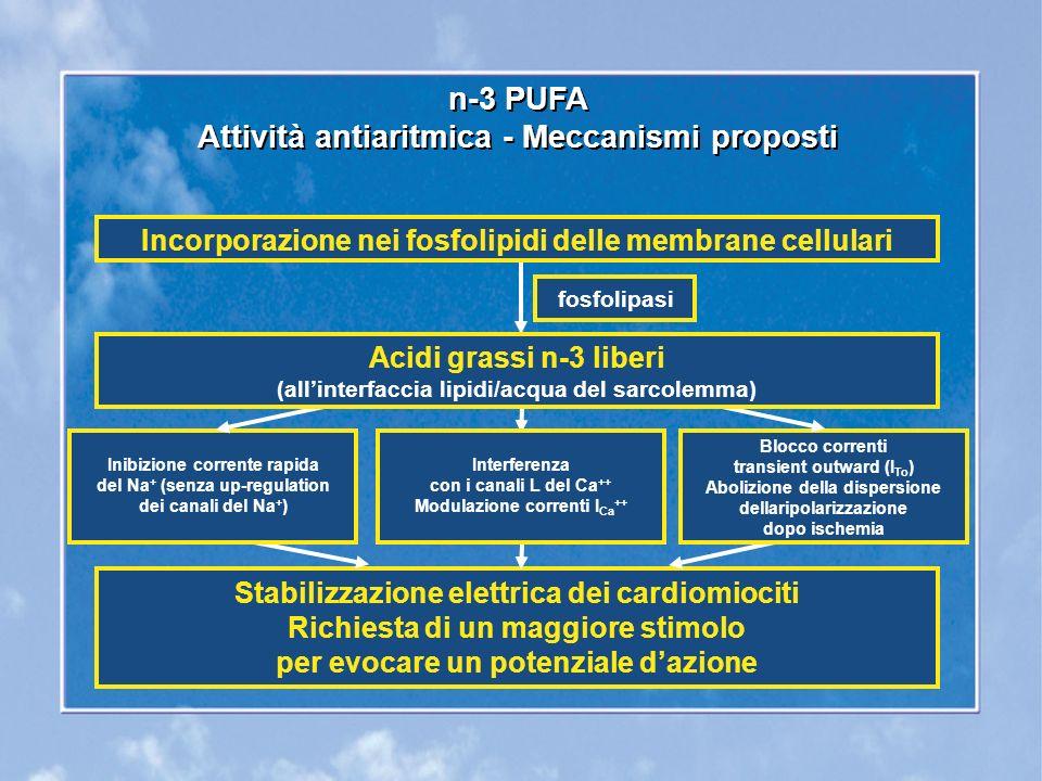 Inibizione corrente rapida del Na + (senza up-regulation dei canali del Na + ) Interferenza con i canali L del Ca ++ Modulazione correnti I Ca ++ Blocco correnti transient outward (I To ) Abolizione della dispersione dellaripolarizzazione dopo ischemia n-3 PUFA Attività antiaritmica - Meccanismi proposti n-3 PUFA Attività antiaritmica - Meccanismi proposti Incorporazione nei fosfolipidi delle membrane cellulari fosfolipasi Acidi grassi n-3 liberi (allinterfaccia lipidi/acqua del sarcolemma) Stabilizzazione elettrica dei cardiomiociti Richiesta di un maggiore stimolo per evocare un potenziale dazione