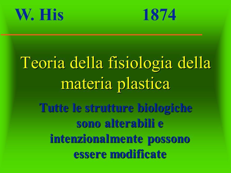 Teoria della fisiologia della materia plastica Tutte le strutture biologiche sono alterabili e intenzionalmente possono essere modificate W. His 1874