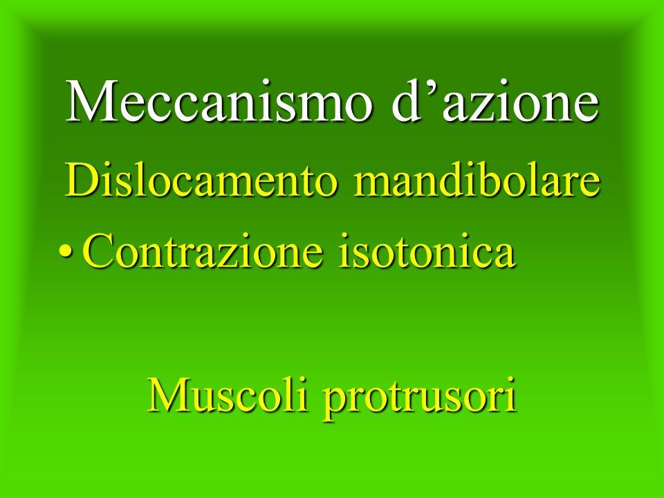 Meccanismo dazione Dislocamento mandibolare Contrazione isotonicaContrazione isotonica Muscoli protrusori