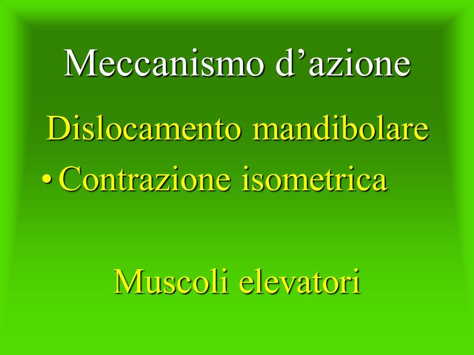 Meccanismo dazione Dislocamento mandibolare Contrazione isometricaContrazione isometrica Muscoli elevatori