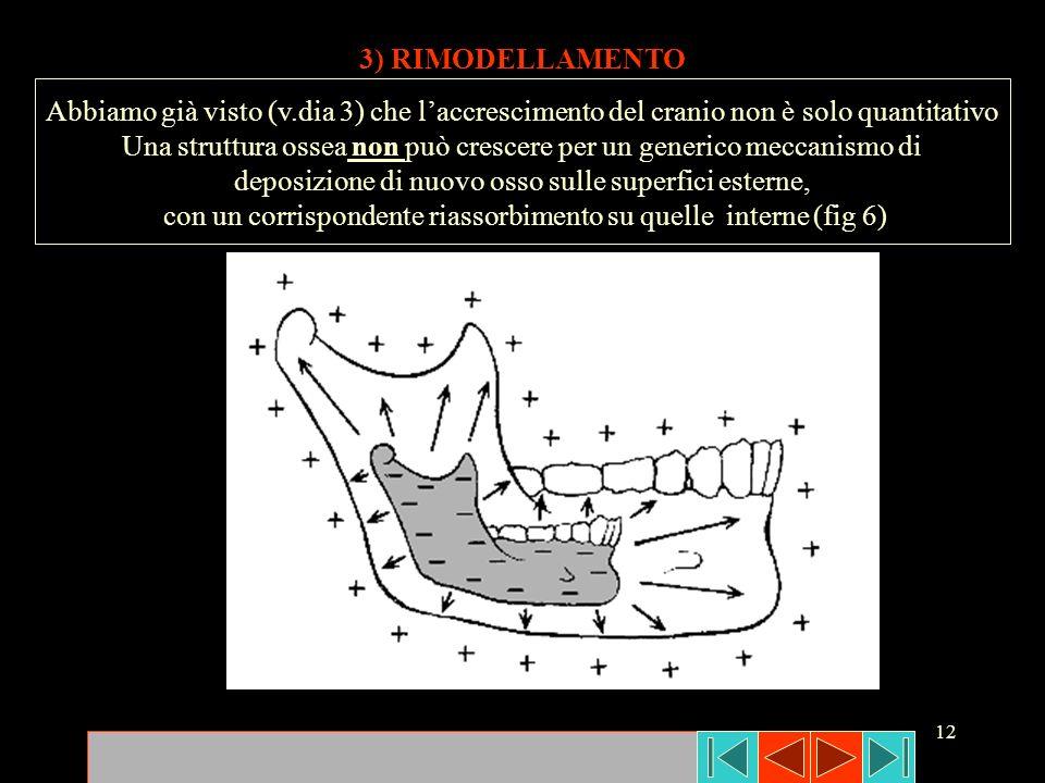 12 3) RIMODELLAMENTO Abbiamo già visto (v.dia 3) che laccrescimento del cranio non è solo quantitativo Una struttura ossea non può crescere per un gen