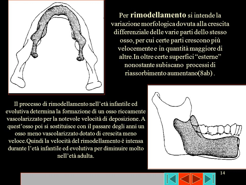 14 Per rimodellamento si intende la variazione morfologica dovuta alla crescita differenziale delle varie parti dello stesso osso, per cui certe parti